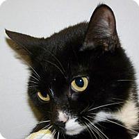 Adopt A Pet :: Jazzy - Kalamazoo, MI