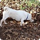 Adopt A Pet :: little girl -$150