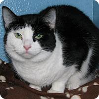 Adopt A Pet :: Serri - New Kensington, PA