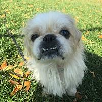 Adopt A Pet :: Dougie - Chicago, IL