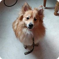Adopt A Pet :: Houdini - Fargo, ND