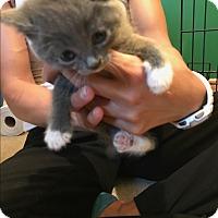 Adopt A Pet :: Litter 1 - Daleville, AL
