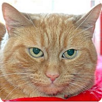 Adopt A Pet :: Dango 08-3514 - Fremont, CA