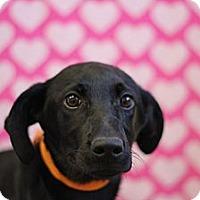 Adopt A Pet :: Holly - Roosevelt, UT
