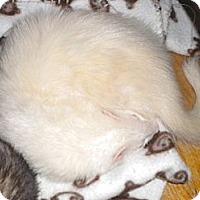 Adopt A Pet :: Dawson - Acworth, GA