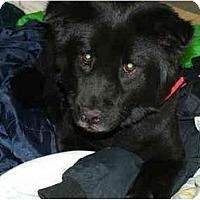 Adopt A Pet :: Lilly - Columbus, OH