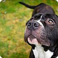 Adopt A Pet :: Max - Seattle, WA