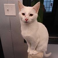 Adopt A Pet :: Houdini - Barnwell, SC