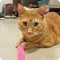 Adopt A Pet :: Colonel Flagg - Chicago, IL