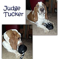 Adopt A Pet :: Judge Tucker - Marietta, GA