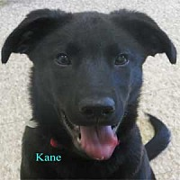 Adopt A Pet :: Kane - Warren, PA