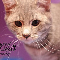 Adopt A Pet :: Finn - Topeka, KS