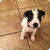 Adopt A Pet :: Riley~adopted! - Glastonbury, CT