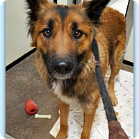Adopt A Pet :: Kona - Tombstone, AZ