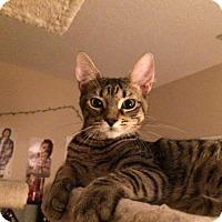Adopt A Pet :: Wizz (MP/JHP) 8.22.16 - Orlando, FL