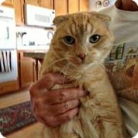 Adopt A Pet :: Phoenix - Beverly Hills, CA