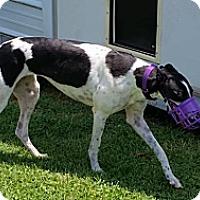 Adopt A Pet :: JJ Par Rage Mary - Knoxville, TN
