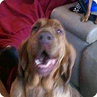 Adopt A Pet :: Daisy mae ADOPTED!! - Antioch, IL