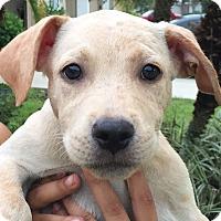 Adopt A Pet :: Angel#6F - Orlando, FL