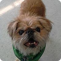 Adopt A Pet :: JACK - Odessa, FL