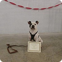 Adopt A Pet :: Chico - Stuart, VA