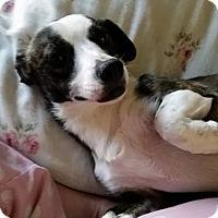 Adopt A Pet :: Kira - Grass Valley, CA