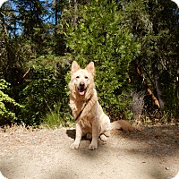 Adopt A Pet :: Mr Banks - Rogue River, OR
