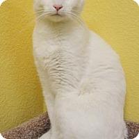 Adopt A Pet :: Casper - Benbrook, TX
