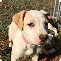 Adopt A Pet :: Olivia - Simpsonville, SC
