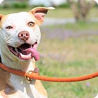 Adopt A Pet :: Clive - Washington, GA