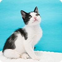 Adopt A Pet :: Derek - Houston, TX
