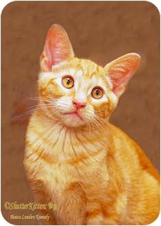 Domestic Shorthair Kitten for adoption in Encinitas, California - Missy