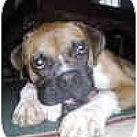 Adopt A Pet :: Fallout - Sunderland, MA