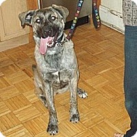 Adopt A Pet :: Marlo - Hamilton, ON