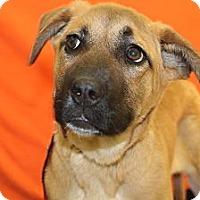 Adopt A Pet :: OMAHA! - Broomfield, CO