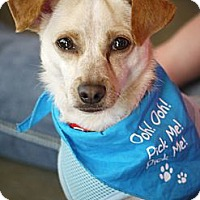 Adopt A Pet :: Scooter - Baton Rouge, LA