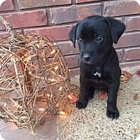 Adopt A Pet :: Mags - Bedminster, NJ
