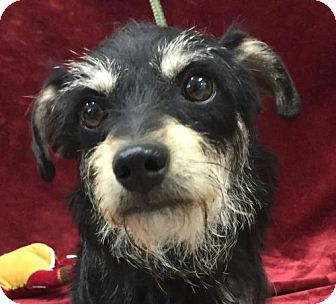 Terrier (Unknown Type, Small) Mix Dog for adoption in Washington, D.C. - Princess