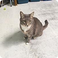 Adopt A Pet :: Loki 2 Chips - Diamond Springs, CA