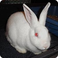Adopt A Pet :: Skylar - Newport, KY