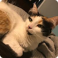 Adopt A Pet :: Addison - Murrieta, CA