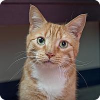 Adopt A Pet :: Charlie - Wilmington, DE