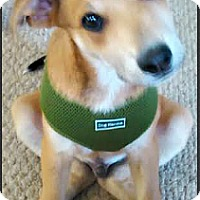 Adopt A Pet :: Alex-ADOPTION PENDING - Boulder, CO