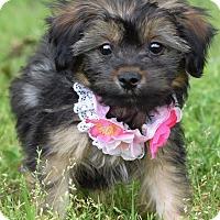 Adopt A Pet :: Annie Oakley - Denver, CO