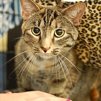 Adopt A Pet :: Natasha - Johnson City, TN