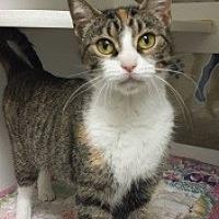 Adopt A Pet :: Rosie 111772 - Joplin, MO