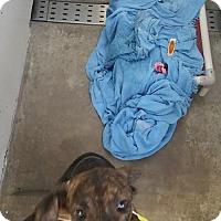 Adopt A Pet :: Tucker - Chippewa Falls, WI
