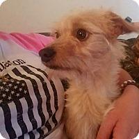 Adopt A Pet :: Ace - Lehigh Acres, FL
