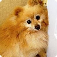 Adopt A Pet :: Felix - Hubertus, WI