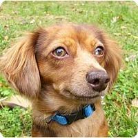 Adopt A Pet :: Melinda - Mocksville, NC